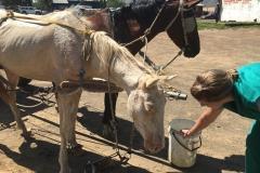outreach-cart-horse
